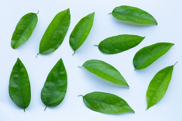 Tiliacora triandra grüne blätter auf weißer oberfläche
