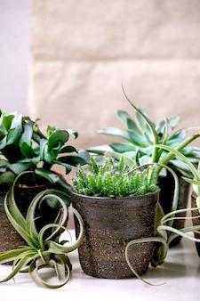Tillandsia luft und verschiedene sukkulenten eonium, kaktus in keramiktöpfen, die auf weißem marmortisch stehen.