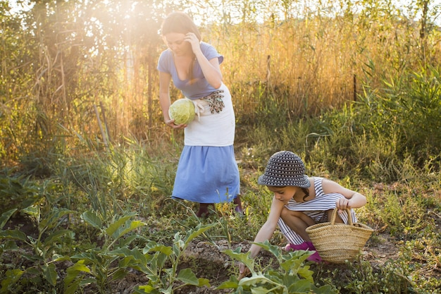 Tochter und mutter, die gemüse auf dem gebiet ernten