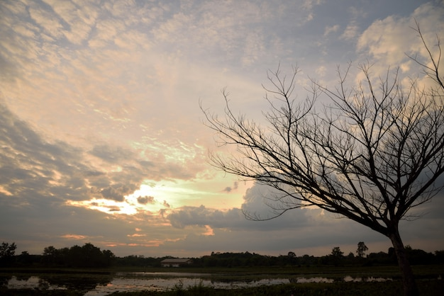 Todesbaum am sonnenuntergang