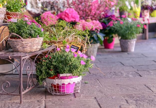 Töpfe mit blühenden rosa blumen für verkauf außerhalb des blumenladens.