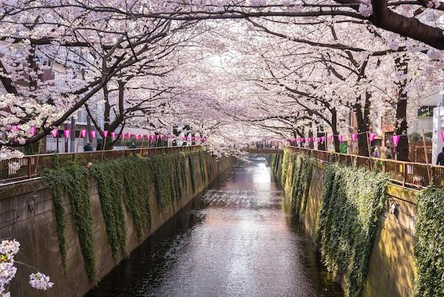 Tokyo, japan bei meguro canal in der frühjahrssaison.