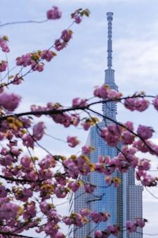 Tokyo skytree mit kirschblüten voller blüte