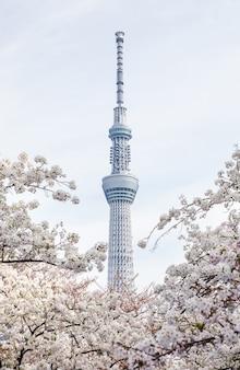 Tokyo skytree mit sakura hintergrund