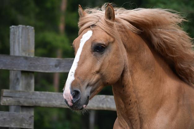 Tolle aussicht auf ein prächtiges pferd