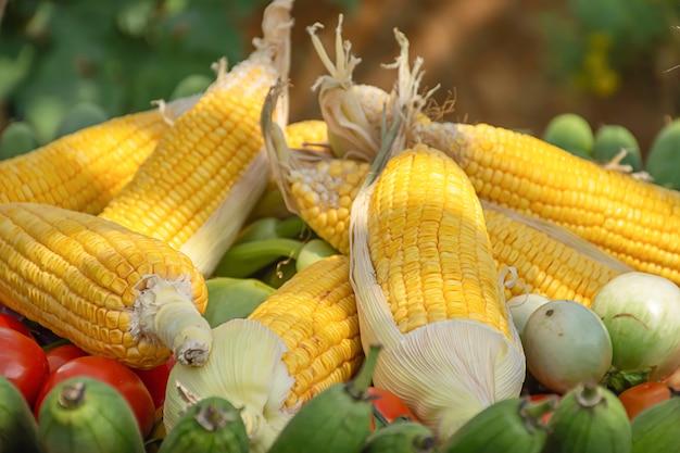 Tomate und mais die einheimische vegetation von thailand