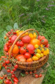 Tomatenmischung in einem korb auf einem holztisch