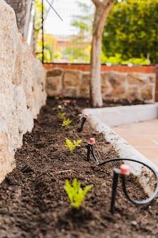 Tomatensämlinge, die im boden am obstgarten wachsen