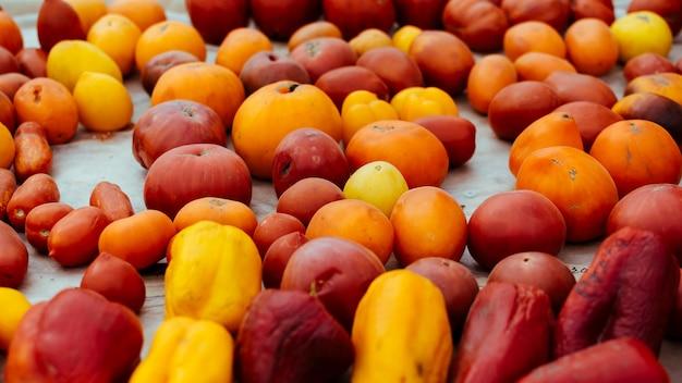 Tomatensorten, bunte vielfalt von bio-tomaten