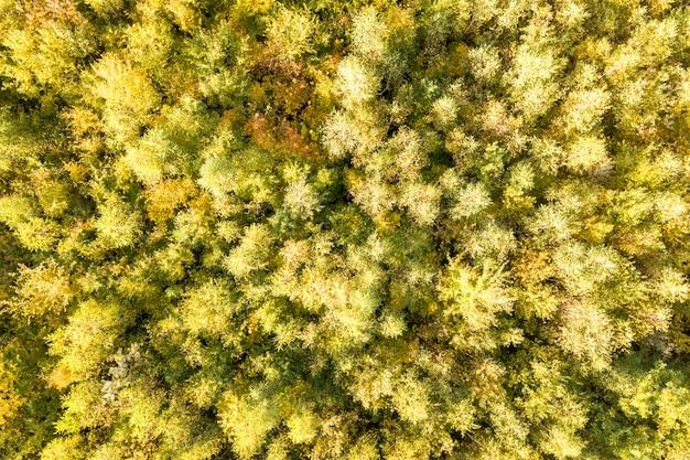 Top-down luftaufnahme von grünen und gelben vordächern im herbstwald mit vielen frischen bäumen.