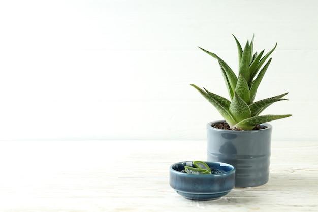 Topf mit aloe-pflanze und schüssel mit gel auf weißem holztisch
