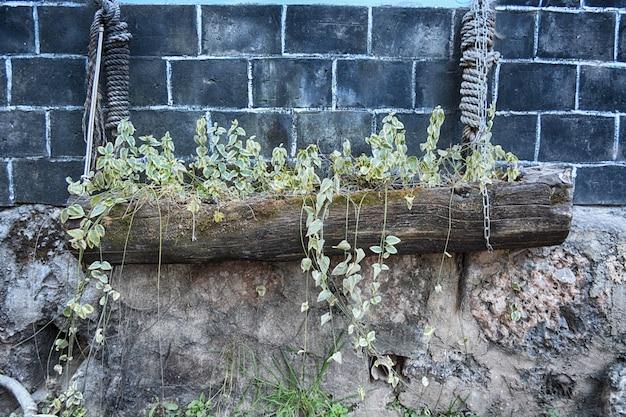 Topf mit pflanzen auf einem stamm mit seilen aufgehängt