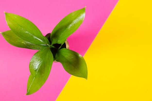 Topfpflanze auf mehrfarbigem hintergrund