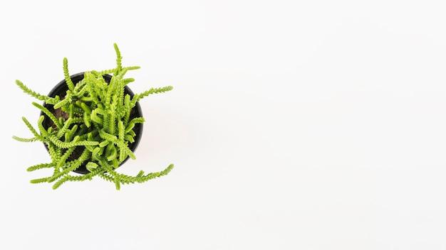 Topfpflanze auf weißem hintergrund