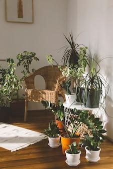 Topfpflanzen auf weißem hintergrund