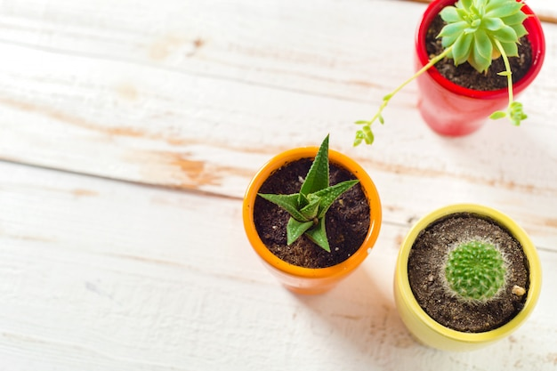 Topfpflanzen auf weißem holz