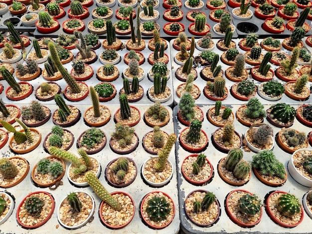 Topview kleine kaktus- und sukkulentenanlage in der kaktusfarm