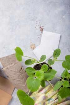 Torfbehälter mit erde, eine pflanze mit gartengeräten pflanzend. garten, pflanzenkonzept. arbeiten im frühlingsgarten auf betontisch. flache lage, draufsicht.