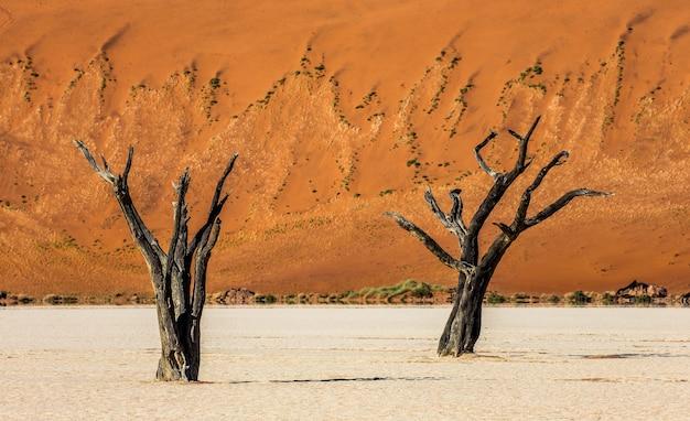 Tote akazienbäume und rote dünen im namib-naukluft-nationalpark, namibia