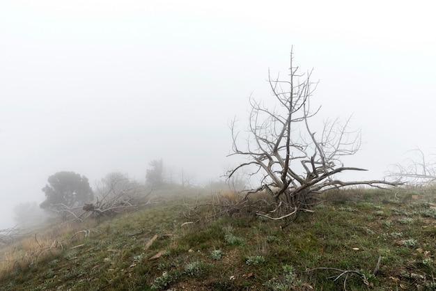 Tote bäume im nebel. unheimlich mystische landschaft