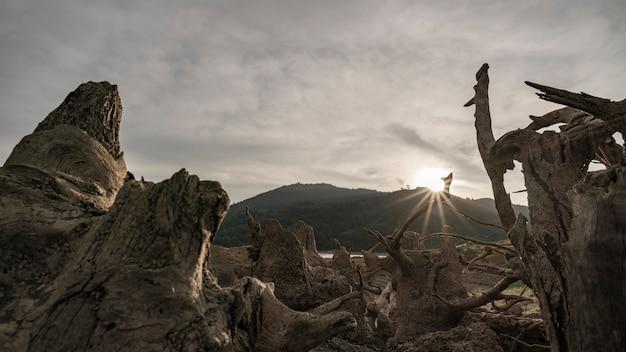 Tote bäume in einer ausgetrockneten seekonzeptwetterumgebung und in einer globalen erwärmung