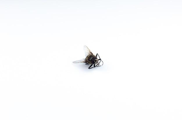 Tote fliege auf weißem hintergrund. nahaufnahme foto. insektenschutz im haus.