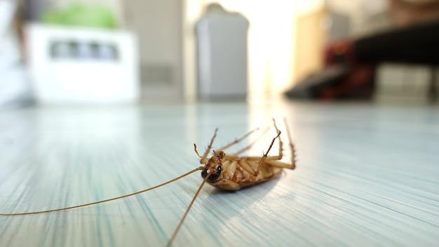 Tote kakerlake auf dem boden, nachdem sie von pestiziden getroffen wurde