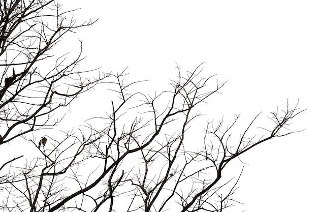 Tote niederlassungen, toter baum des schattenbildes oder trockener baum auf weißem hintergrund mit beschneidungspfad.