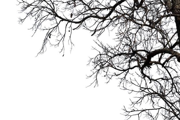 Tote zweige, toter baum des schattenbildes oder trockener baum auf weißem hintergrund mit beschneidungspfad.