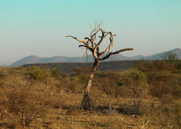 Toter baum auf landschaft in kenia afrika