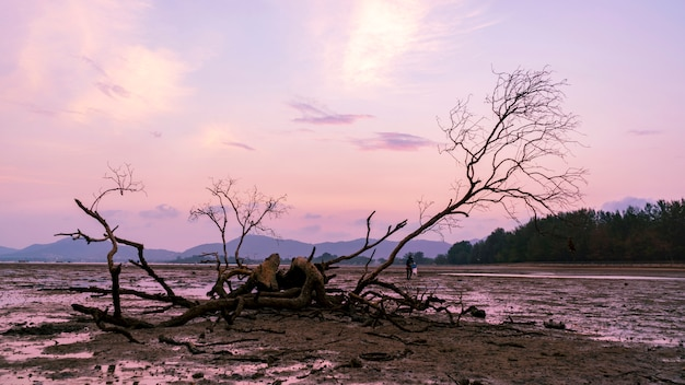 Toter baum in der tropischen seesonnenuntergang- oder -sonnenaufgangabendzeit