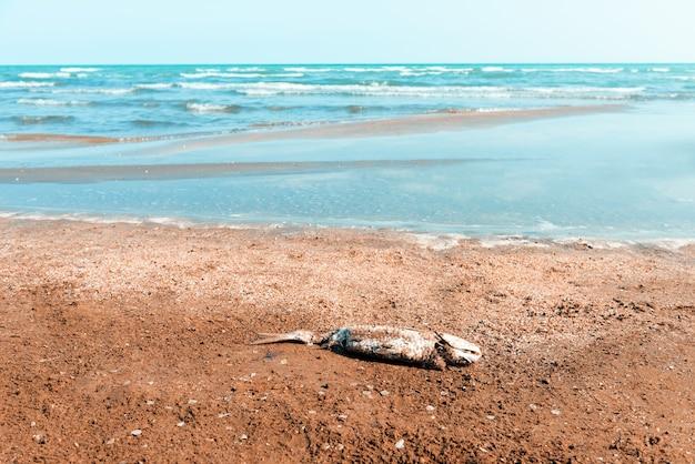 Toter fisch am ufer