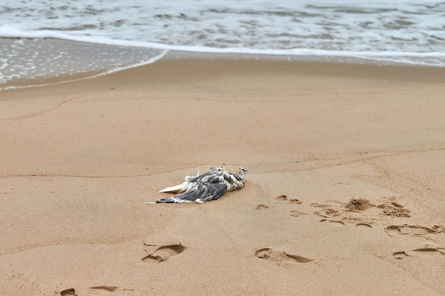 Toter seevogel auf verschmutztem sandstrand. ausgestreckter toter vogel an der küste. meeresvögel, die fische fressen, die plastik verdaut haben. vergiftung und tötung von meerestieren.