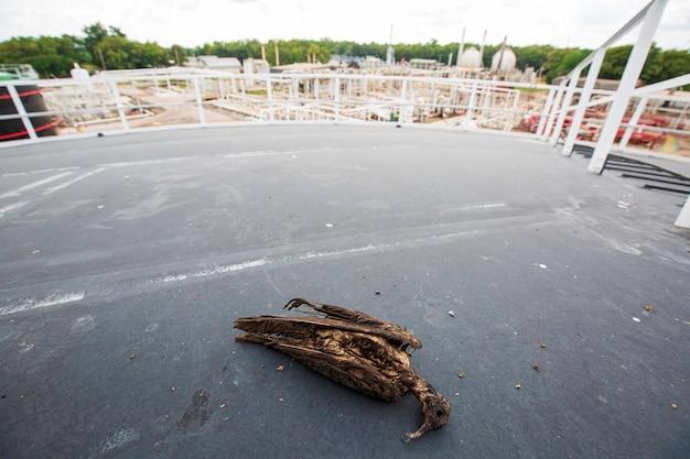 Toter vogel auf dachplatte tank wasser verschmutzt mit rohöl