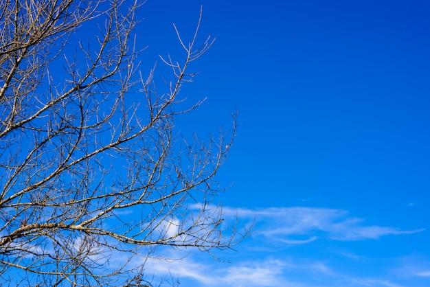 Toter zweigbaum mit dem blauen himmel