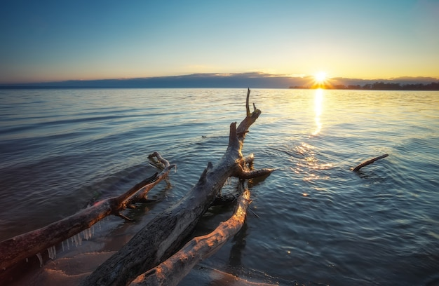 Totes holz im meer bei sonnenuntergang. ein haken im sand des strandes