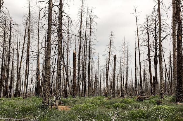 Totholz, ökologische umweltlandschaft.