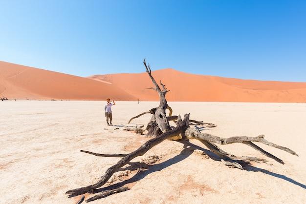 Tourist, der foto am szenischen umsponnenen akazienbaum umgeben durch majestätische sanddünen bei sossusvlei macht