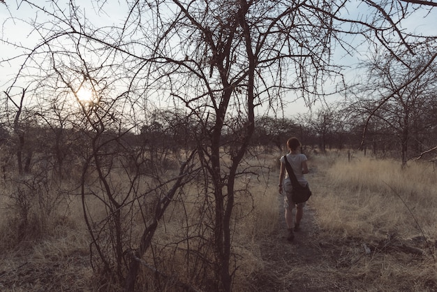 Tourist, der in den busch und in die akazienwaldung bei sonnenuntergang, bushmandland, namibia geht.