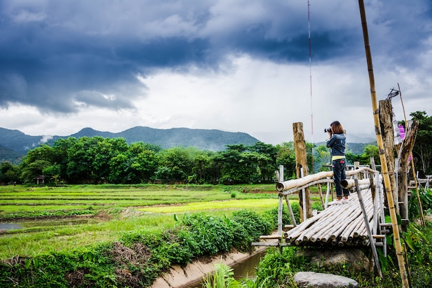 Tourist genießen frischluft der landschaft, auf holzbrücke auf dem reisgebiet am norden von thailand