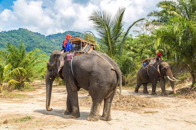 Touristen, die elefanten in thailand reiten