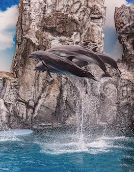 Touristen nutzen die feiertage, um sich zu entspannen, indem sie delfin- und seelöweaufführungen bei safari world park, bangkok, thailand aufpassen