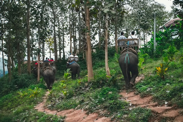 Touristen reiten elefanten im wilden wald, auf dem fluss und im elephant park. menschen sitzen auf elefantenrücken in wunderschönen grünen asiatischen landschaften. laos. luang prabang