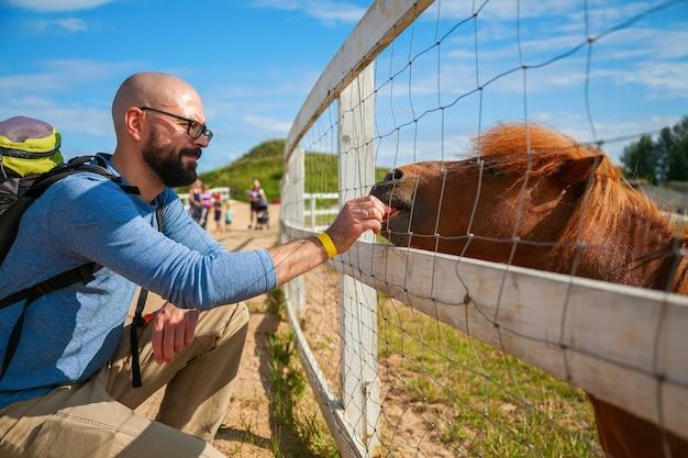 Touristischer mann, der junge schöne pony-karotte durch den zaun füttert
