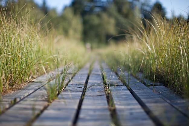 Touristischer promenadenweg in der sumpfspur umgeben durch hohes gras
