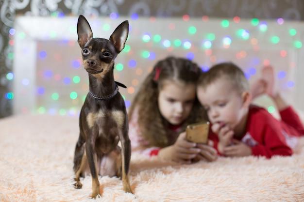 Toy dog terrier ist gelangweilt, kinder telefonieren im neuen jahr