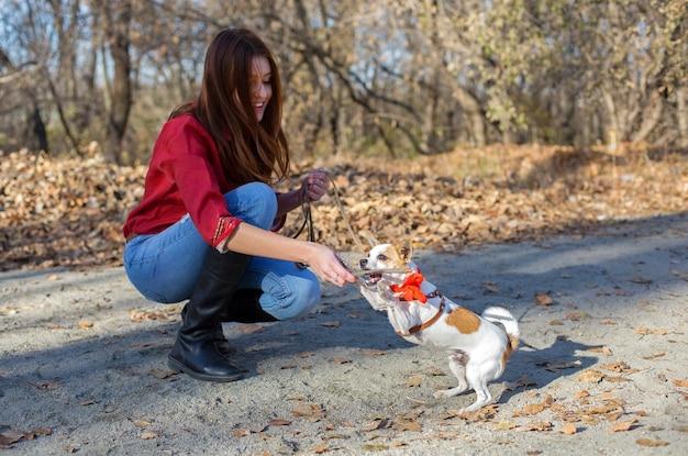 Toy terrier hundejäger beißen holzstab, training im freien