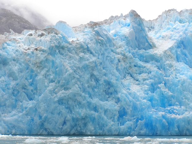Tracy arms ford glacier terror wildlife. südöstliches alaska, usa
