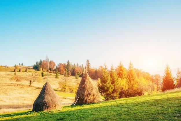 Traditionelle heuhaufen, typische ländliche szene. karpaten. ukraine
