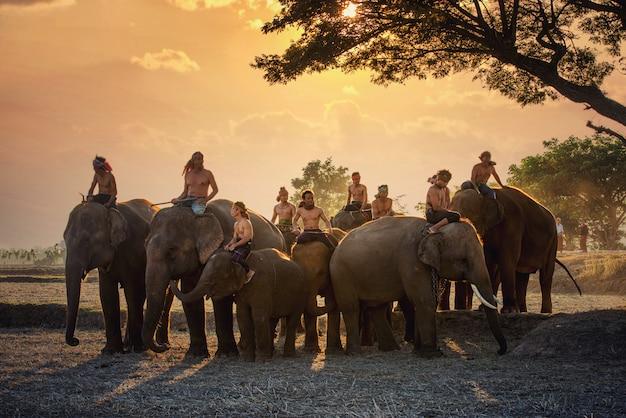 Traditionelle thailändische männer mit elefanten